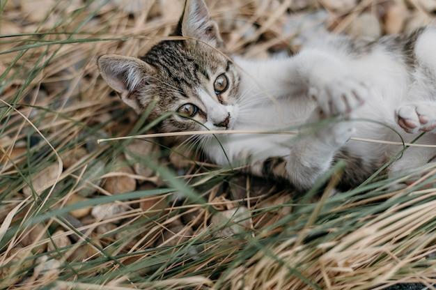 Очаровательная маленькая кошка играет на открытом воздухе Premium Фотографии
