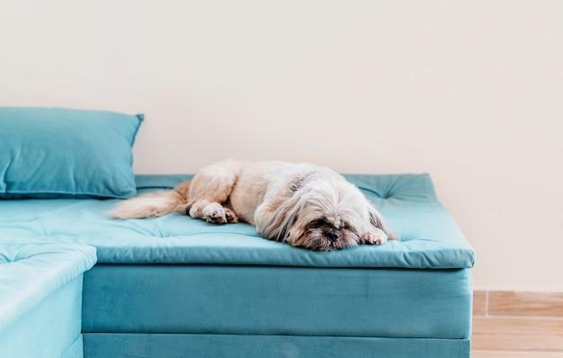 リラックスできる愛らしい小さな犬 Premium写真