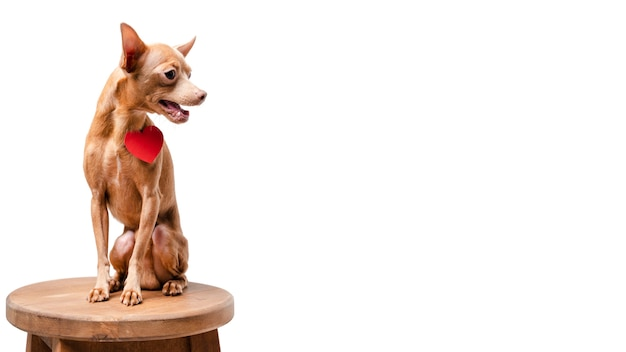 Piccolo cane adorabile che si siede su una sedia con lo spazio della copia Foto Gratuite