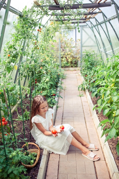 Adorable little girl harvesting cucumbers and tomatoes in greenhouse. Premium Photo