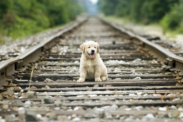 Cucciolo di golden retriever solitario adorabile che si siede sui binari del treno con uno sfondo sfocato Foto Gratuite