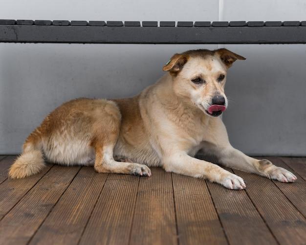 Adorabile cane da salvataggio al rifugio in attesa di essere adottato Foto Gratuite