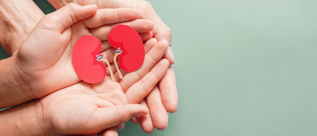 Adult and child holding kidney shaped paper on textured blue background, world kidney day, national organ donor day, charity donation concept Premium Photo