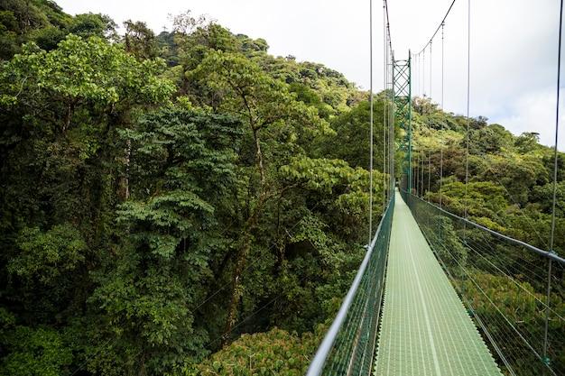 Adventure suspension bridge in rain forest at costa rica Free Photo
