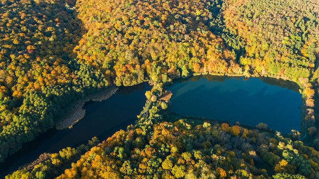 Aerial drone view of forest with yellow trees and beautiful lake landscape from above, kiev, goloseevo forest, ukraine Premium Photo