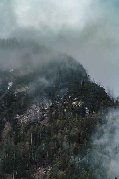 Aerial shot of beautiful dark foggy forest Free Photo