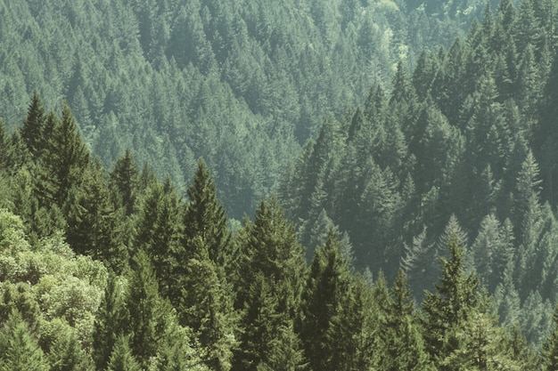 Aerial shot of a beautiful forest with pine trees Free Photo