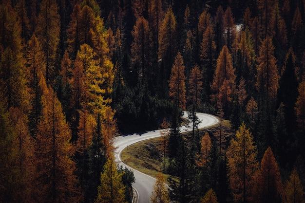 Воздушный выстрел из извилистой дороги в середине желтых и зеленых деревьев Бесплатные Фотографии