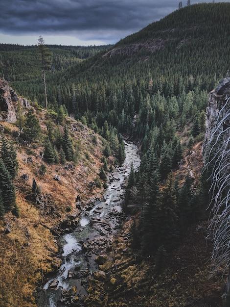 鬱蒼とした森と川のある山の風景の空中ショット 無料写真