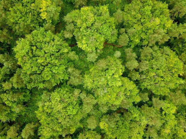 ドローンが撮影したイギリス、ドーセットの森の緑の木々の空中ショット 無料写真