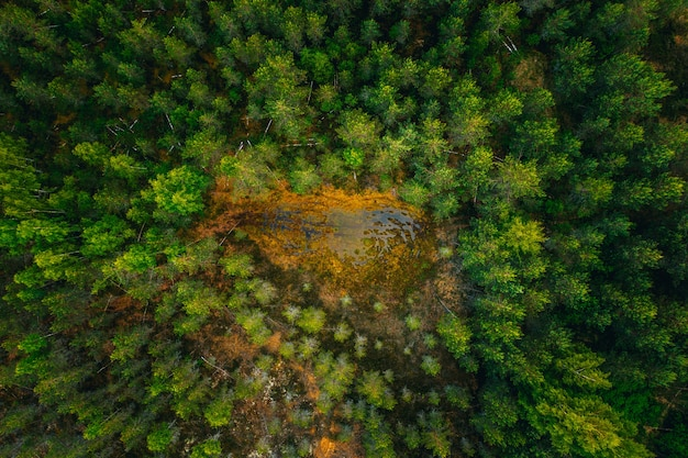 Aerial shot of a water surface in the middle of a forest surrounded by tall green trees Free Photo
