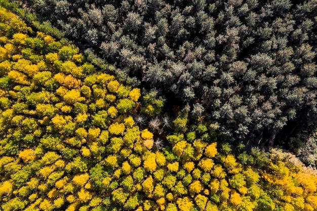 Аэросъемка сухого старого леса осенью сверху Premium Фотографии