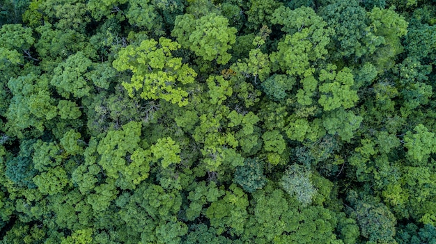 Aerial Top View Forest Texture Of From Above Premium Photo
