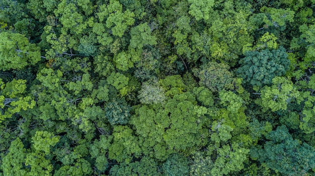 Aerial top view forest, Premium Photo