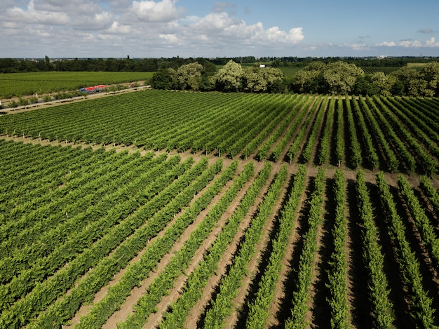 Aerial top view from drone to vineyard Premium Photo