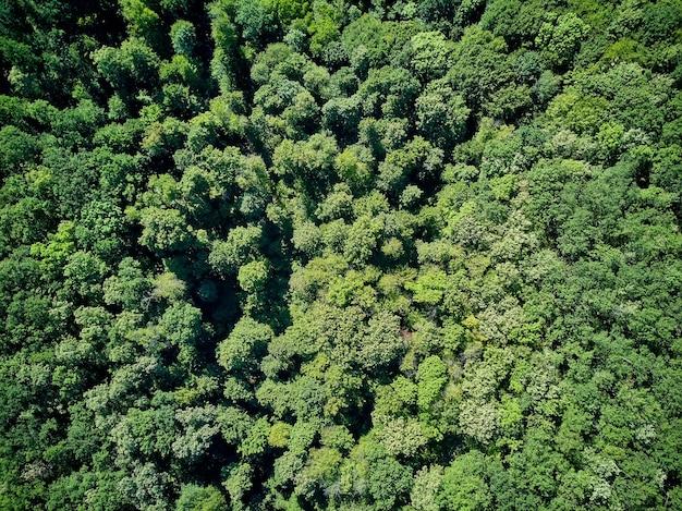 9月の野生公園の秋の木の空中上面図 Premium写真