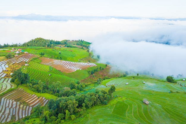 Aerial top view photo from flying drone of green rice fields in countryside Premium Photo