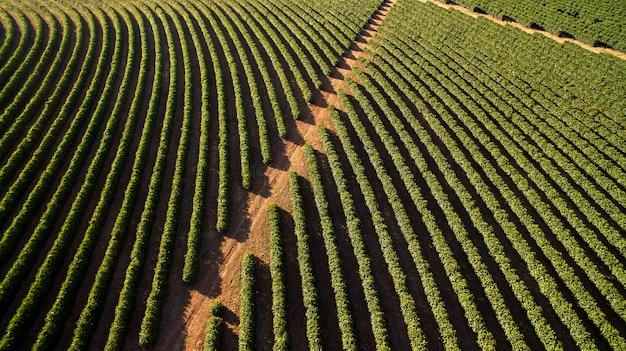 Aerial view coffee plantation in minas gerais state - brazil Premium Photo