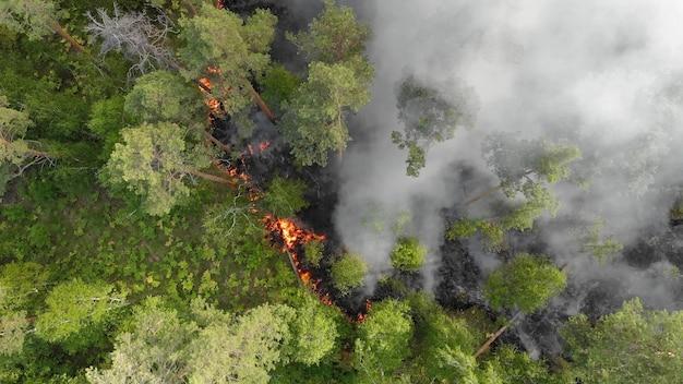 Вид с воздуха. яростные лесные пожары. Premium Фотографии