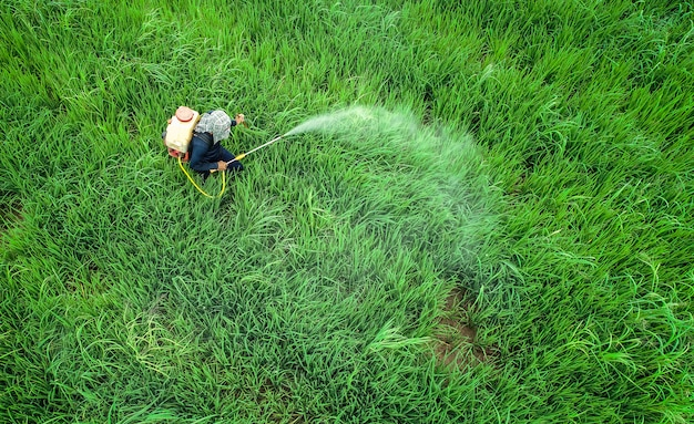 Aerial view from flying drone. thai farmer spraying chemical to young green rice field Premium Photo
