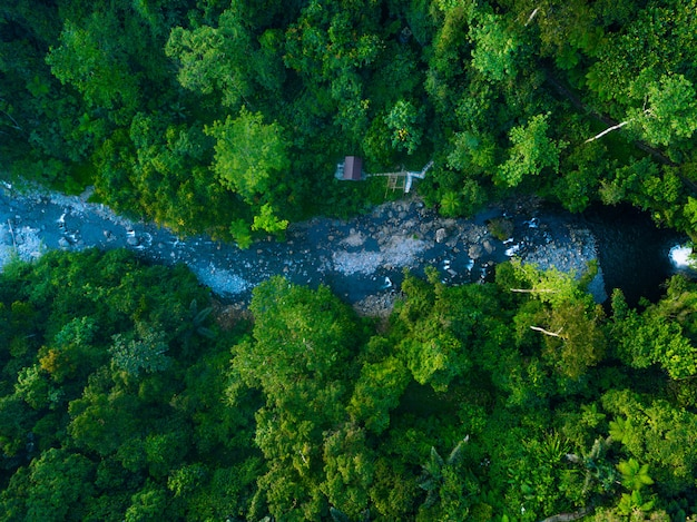 Aerial view green forest in north bengkulu indonesia, amazing light in forest Premium Photo
