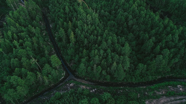 Aerial view of green forest Free Photo