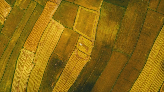 Aerial view of harvested rice fields with a harvester Premium Photo