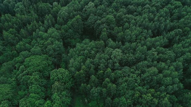 緑の森の空撮 無料写真