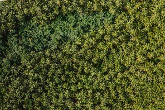 インドネシアのメンタワイ諸島の熱帯の木々の空撮-背景に最適 無料写真