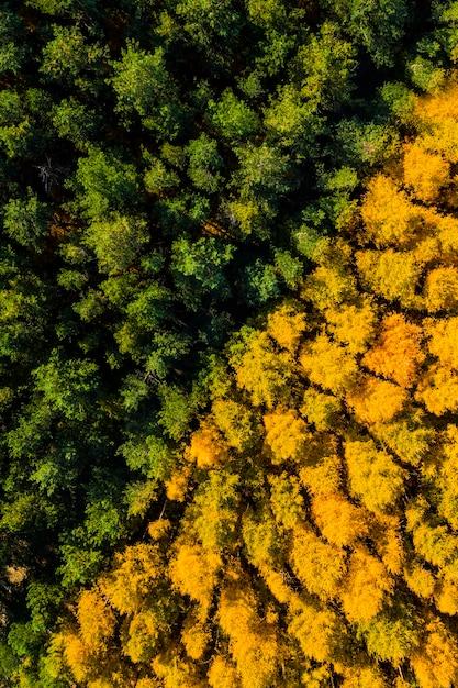 Аэрофотоснимок желто-зеленого леса осенью сверху Premium Фотографии