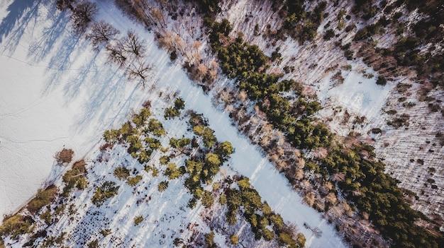 Вид с воздуха на деревья, покрытые снегом в лесу в мюнхене Premium Фотографии