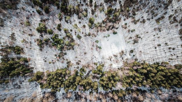 ミュンヘンの森で雪に覆われた木の空撮 Premium写真