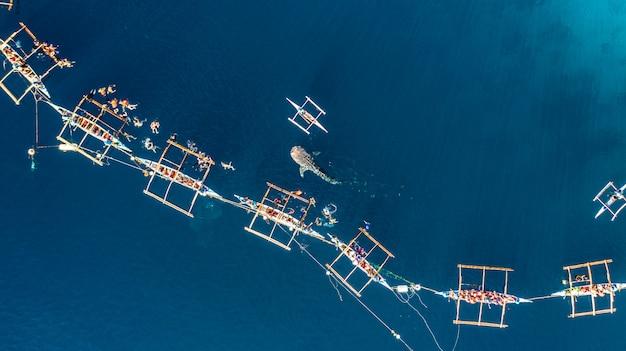 Aerial view oslob whale shark watching Premium Photo