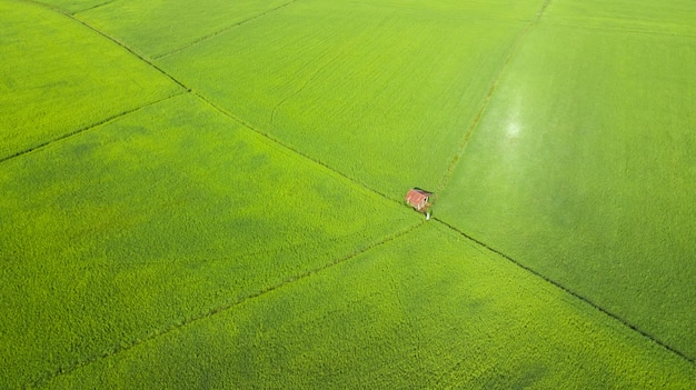 Aerial view rice fields in the morning, thailand Premium Photo