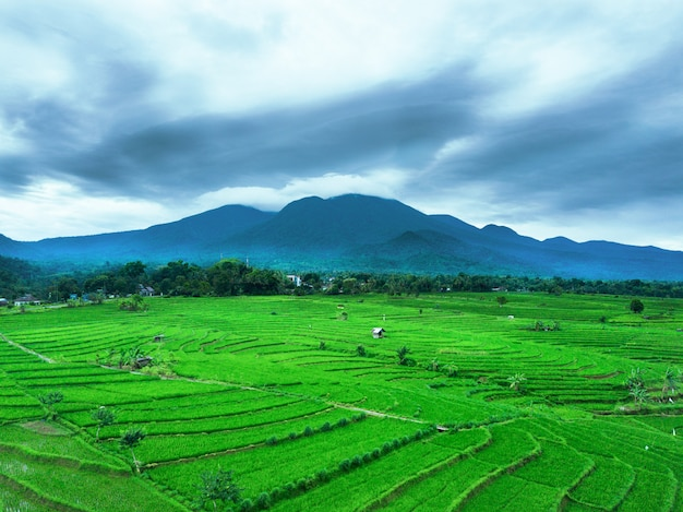 Aerial view rice fields with mountain Premium Photo