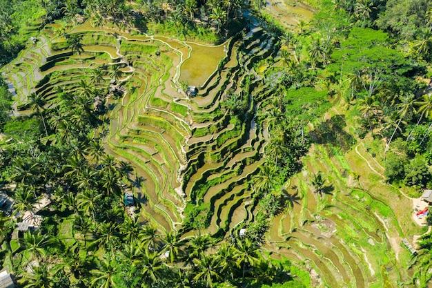 Vista aerea dei campi di riso terrazzati bali, indonesia Foto Gratuite