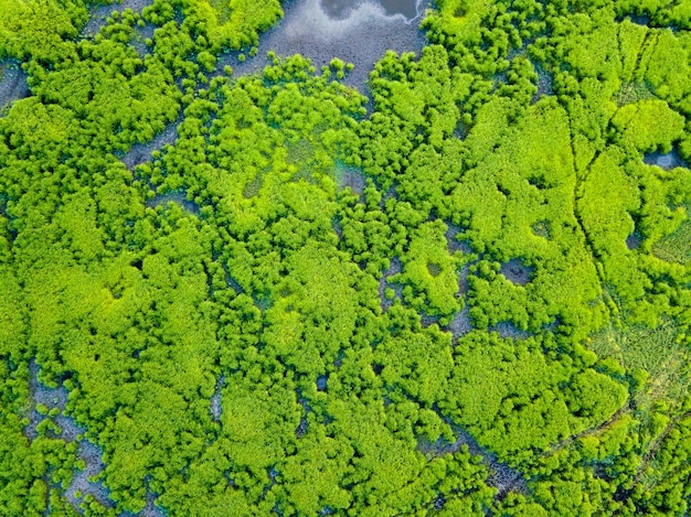 Aerial view wetland Premium Photo