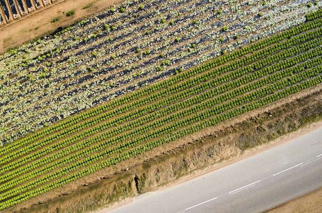 Aerial views of several fields of crops Premium Photo