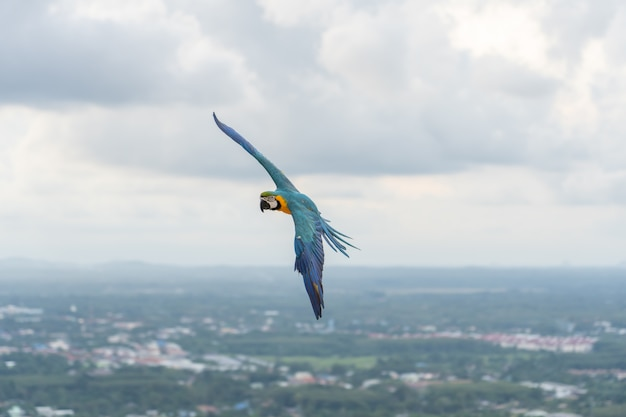 Africa macaw flying Premium Photo
