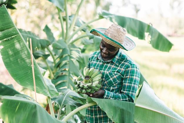 African farmer holding banana at organic farm Premium Photo