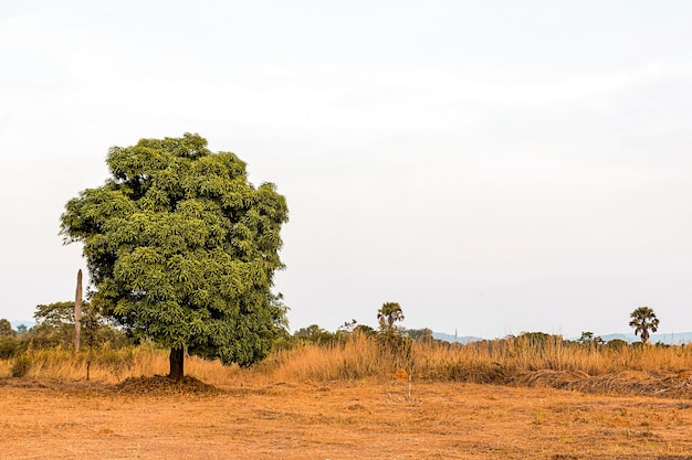 African nature scenery with clear sky and tree Free Photo