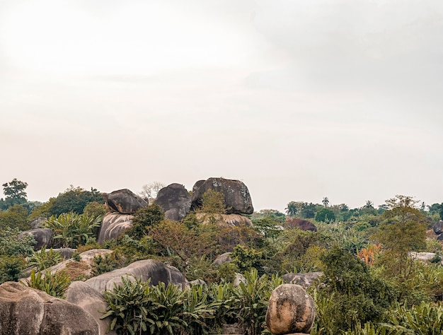 African nature view with vegetation Free Photo