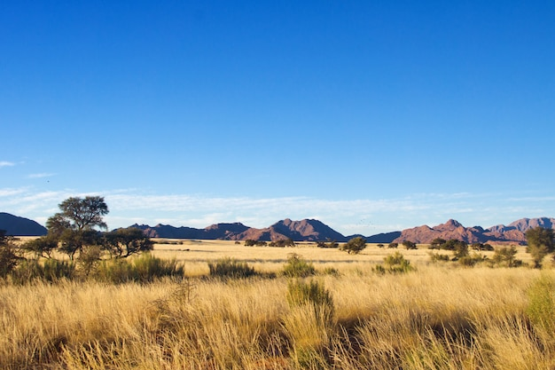 African savanna landscape, namibia, south africa Premium Photo