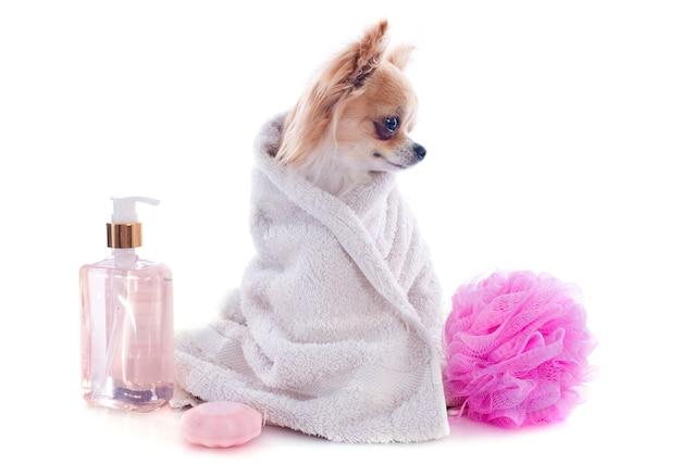 After the bath Premium Photo
