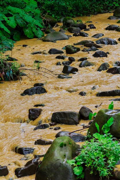 After a heavy rain storm, muddy brown water runoff fills a small stream Premium Photo