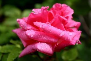 After the rain, moist Free Photo