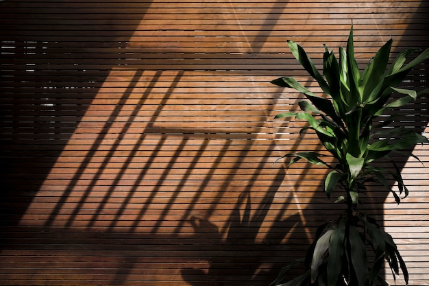 Afternoon shadows on a wooden wall Free Photo