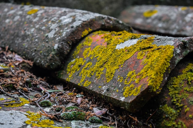 Aged roof tiles with lichens Premium Photo