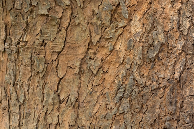 Aged tree bark background texture, pattern of grungy wood crust Premium Photo