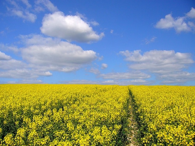 Agricultural Crops Images Agricultural Crop Plant Field